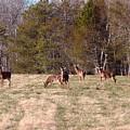 Oh Deer by Donna Cavanaugh