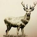 Oh Deer  by Lauren James