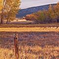 Oh Deer by Nancy Marie Ricketts