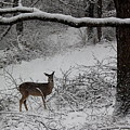 Oh Deer by Rick Lyell