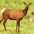 Oh Deer by Trish Tritz