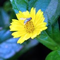 Oh My A Fly  by Belinda Lee