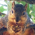 Oh Nuts by Linda Henriksen