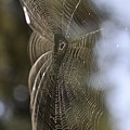 Oh What Webs We Weave by Clayton Bruster