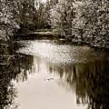 Ohio Autumn Bw by Christine Scott