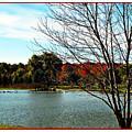 Ohio Duck Pond by Joan  Minchak