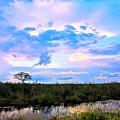 Okavango Sundowners by Katie Seymour