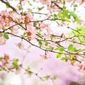 Oklahoma Spring by Toni Hopper