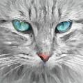 Ol' Blue Eyes by Robert Kinser