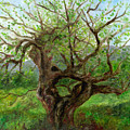 Old Apple Tree by FT McKinstry