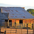 Old Barn At Sunset by Carol Sheli Cantrell