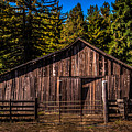 Old Barn Coleman Valley Road by Blake Webster