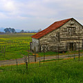 Old Barn In The Mustard Fields by Tom Reynen