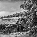 Old Barn by Rodney Cammauf