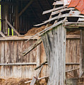 Old Barn Ruin  by Bob Phillips