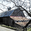 Old Barn With Tree Watercolor by Laurie With