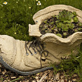 Old Boot by Paul Cannon