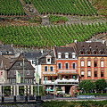 Old Buildings And Vineyards by Sally Weigand