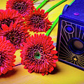 Old Camera And Dasies by Garry Gay