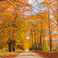 Old Coach Road Autumn by Tim Kirchoff