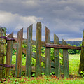 Old Country Gate by Steven Michael