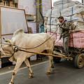 Old Delhi From A Rickshaw 07 by Werner Padarin