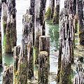Old Dock Remains by Elizabeth Dow