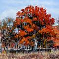 Old Fall Oak by John Lautermilch