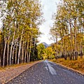 Old Fall River Road With Changing Aspens - Rocky Mountain National Park - Estes Park Colorado by Silvio Ligutti