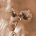 Old Fashioned Wild Flowers  by Debby Pueschel