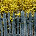 Old Fence by Bernd Billmayer