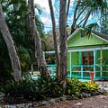 Old Florida 4 by Susan Molnar