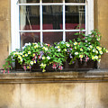 Old Flower Box by Butter Milk