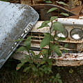 Old Ford Truck by Mary Ourada