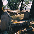 Old Grave  by Cindy New