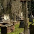 Old Graveyard by Darylann Leonard Photography