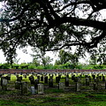 Old Graveyard Framed By Live Oak by Angie Covey