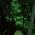 Old Growth Forest At Lost Lake On Mount Hood by Rick Bures