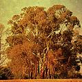 Old Gum Tree by Georgiana Romanovna