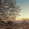Old Harvester By The Birch Tree by Jukka Heinovirta