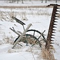 Old Horse Drawn Sickle Mower by Nicole Frederick