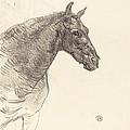 Old Horse (le Vieux Cheval) by Henri De Toulouse-lautrec