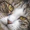 Old Kitty by Sue Matsunaga