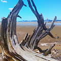 Old Log On Auckland Beach by Clive Littin