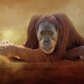 Old Man Orangutan by Michele Wright