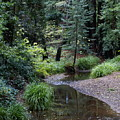Old Mill Park In Mill Valley 2 by Ben Upham III