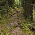 Old Mitchell Trail In Spruce-fir Forest by John Arnaldi