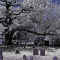 Old Oak At Burying Point by Jeff Folger