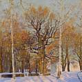 Old Oak-tree In Kolomenskoye by Simon Kozhin