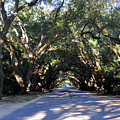Old Oak Tunnel by Skip Willits